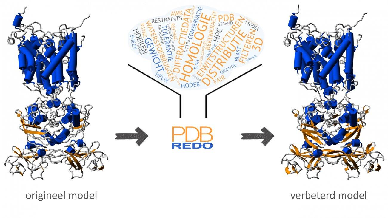 Eiwitstructuurmodel